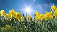 Frühlingsblumen und sonniger Himmel