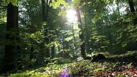 Tiro deslizante en un bosque soleado
