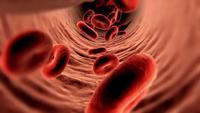 Rode bloedcellen bewegen in de bloedbaan in het lichaam