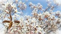 Våren blommar på solig dag