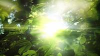 La luz del sol y las hojas verdes de los árboles