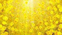 Loop de fundo de flores de verão
