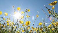 Sol e flores da primavera