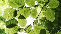 Grüne Blätter schließen oben