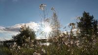 Primer plano de flores de verano