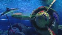 Water Life Aquarium Fishes and Old Plane in Underwater