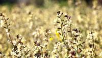 Fleurs en journée venteuse