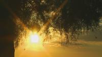 Solnedgång och trädet