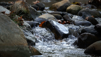 Vattenfallsikt i naturen