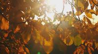 Autumn Leaves and Sunlight Flashes