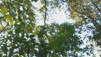 Fondo borroso de las copas de los árboles en un bosque