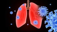 Covid-19 Virus And Lungs Animation