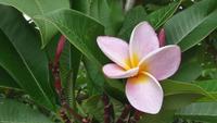 Rosa Blume und Blätter in einem Sommergarten