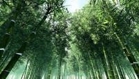 Weelderige groene hoge bos bamboe bomen