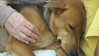 Mujer mayor acariciando a su perro con amor.