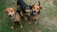 Three Happy Mixed Breed Dogs Looking Up at Camera