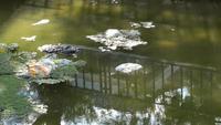 Contaminación del agua con suciedad y basura plástica