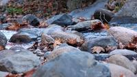 Fechar pedras e folhas de cachoeira