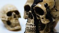 Zwei Schädel und schwarze Tinte