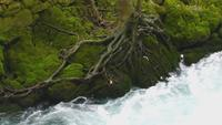 Waterfall in River and the Body of Green Mossy Tree
