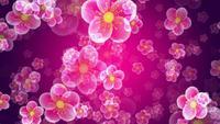 Transparante bloemen die op een roze achtergrond vliegen