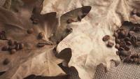 Rostade kaffebönor torra löv