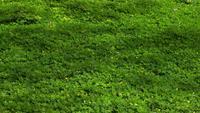 Weite Ansicht des Pinto-Erdnussfeldes