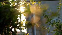 Sunlight lit green swaying branch at sunset