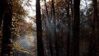 Vallende herfstbladeren in een bos in het Yedigoller National Park in Turkije
