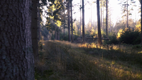 Sonnenstrahlen erhellen an einem frühen Morgen den Waldboden