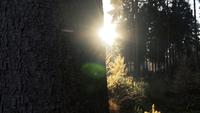 Schießen neben einem Baum, der die schöne Morgensonne fängt