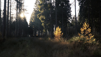 Sonnenstrahlen erhellen teilweise den Wald