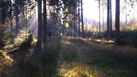 De zon schijnt op mysterieuze wijze door het bos