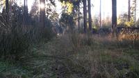 Ein niedriger Schuss durch das Gras in einem Wald