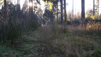 Um tiro baixo através da grama em uma floresta