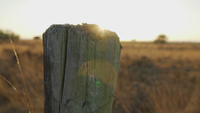 Die Sonne hinter einem Holzpfahl auf einem Feld aussetzen