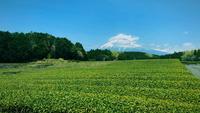 Groene theetuin, landschap achter Onderstel Fuji.
