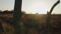 Zonsondergang die van achter een dode boom komt