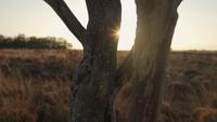 Sonne, die zwischen Baumstämmen während des Sonnenuntergangs funkelt
