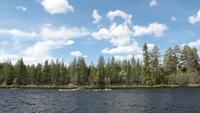 Río y bosque durante el verano