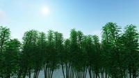 Grüne Bäume tanzen mit dem Wind