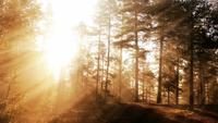 Glödande Fantasy Forest Bakgrund