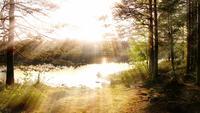 Märchenwald-Hintergrundschleife