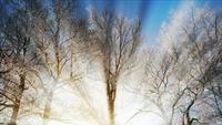 Bevroren bomen in de winter en zonlicht