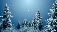 Árboles de invierno y estrellas fugaces