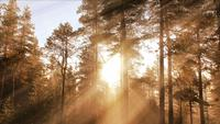 Solig höstskogbakgrund