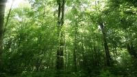 Grön skog under våren