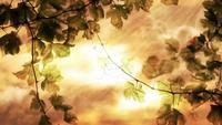 Boucle de feuilles de vigne rustique