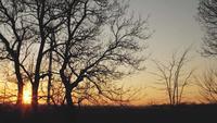 Silhouetten van bomen bij een zonsondergang