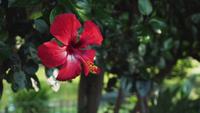 Hermosa flor roja panorámica panorámica